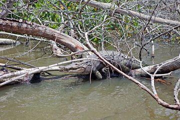 Alligator (Jamaika) von t.ART