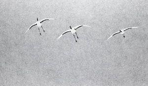 Chinese Kraanvogels vliegend in sneeuwbui