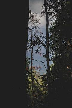 Uitzicht door de bomen van Ennio Brehm