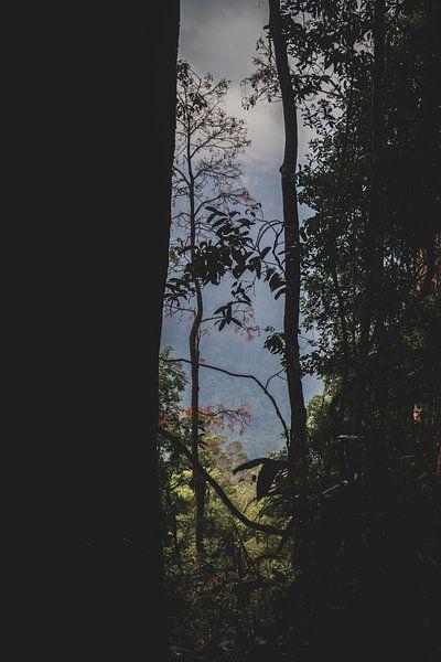 Blick durch die Bäume von Ennio Brehm