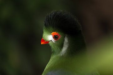 Exotische vogel van Hanna Vlietstra