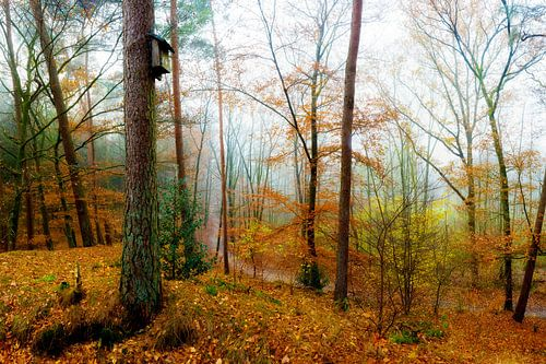 Foggy autumn forest van