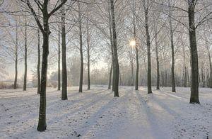 Zonnige winterdag bij recreatie gebied Rijkerwoerd.