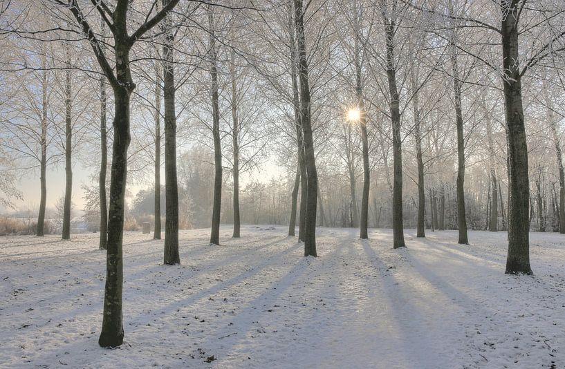 Zonnige winterdag bij recreatie gebied Rijkerwoerd. van Rob Christiaans