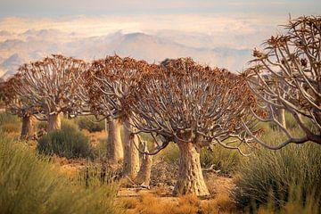 kokerbomen van Ed Dorrestein