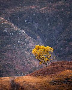 Le petit arbre jaune sur Ton Drijfhamer
