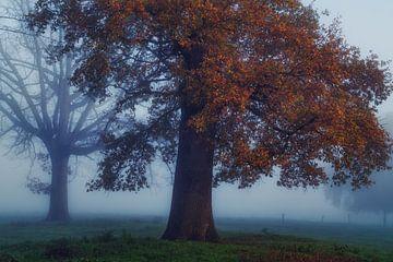 Niet elke boom is even gelukkig van Joris Pannemans - Loris Photography
