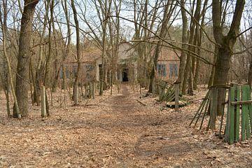 Kinderopvang in bossen van Dennis Brok