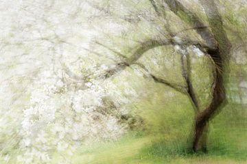 Blühender alter Kirschbaum, abstrakte Mehrfachbelichtung, die an ein Gemälde erinnert, Kopierraum, u von Maren Winter
