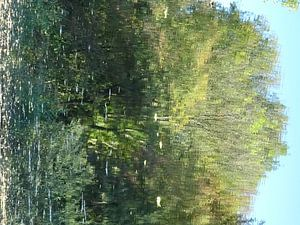 Urban Reflections 142 van