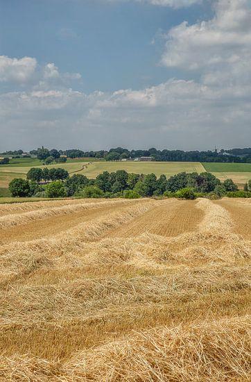 Velden met stro in Zuid-Limburg