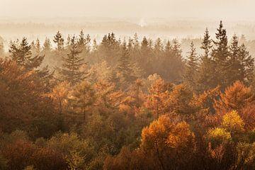 Kaapse Bossen in de Herfst van Portrait of Holland