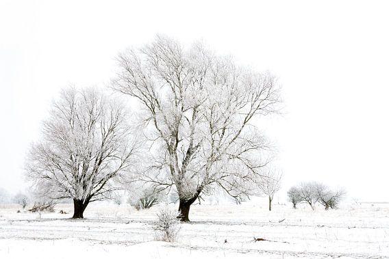 Winter wonderland in de Kollumerwaard
