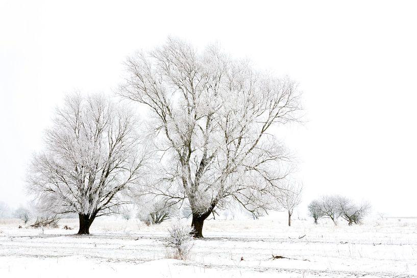 Winter wonderland in de Kollumerwaard van Ron ter Burg