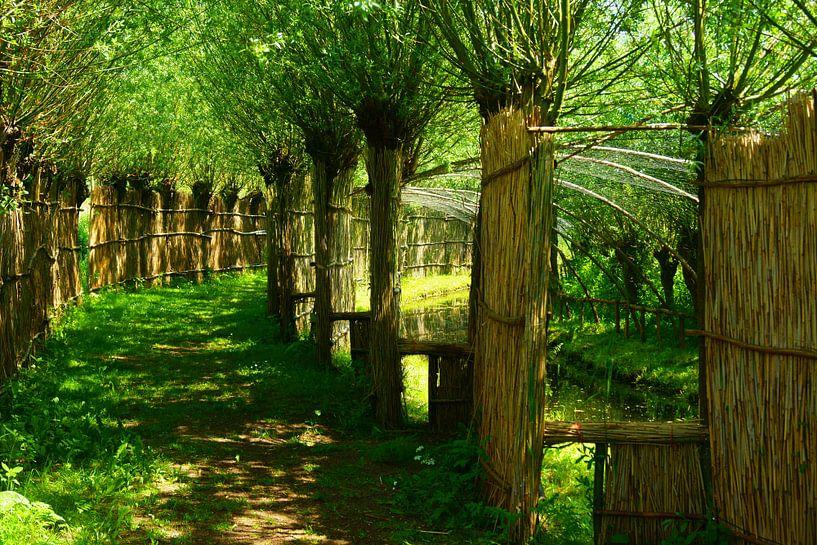Eendenkooi in de Biesbosch van Michel van Kooten