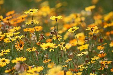 Blumenmeer van
