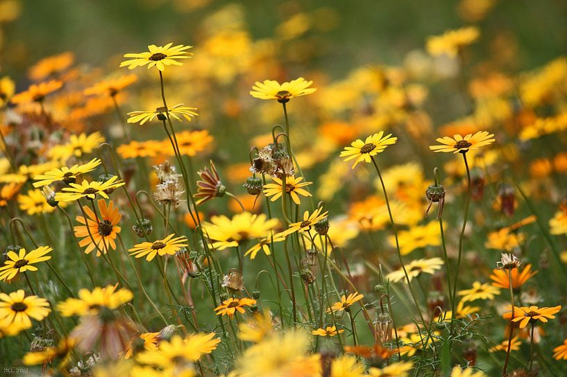 Blumenmeer von Meleah Fotografie