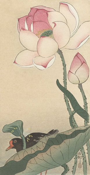 Gallinule met lotusbloemen van Ohara Koson van Gave Meesters