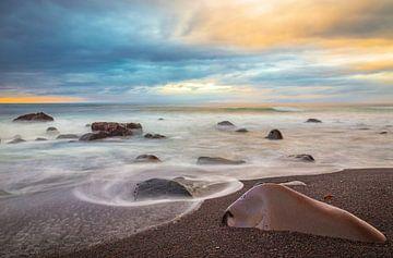 Maia Beach van