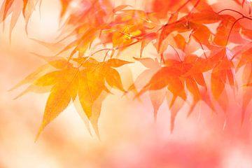 Herbst von Francis Dost