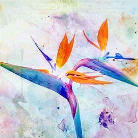 Bird of Paradise Flower van Jacky Gerritsen