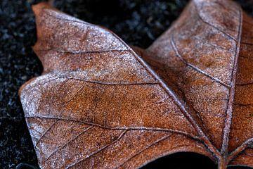 Frozen leaf van