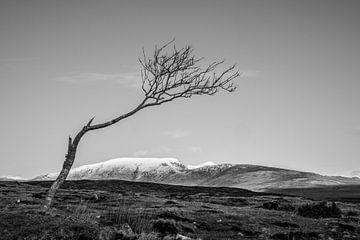 Einsamer Baum in Irland von Bo Scheeringa