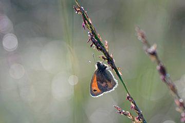 Schmetterlinge in der fruhe Morgen von Barbara Brolsma
