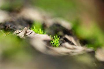 In den Händen von Mutter Erde von Gitta Reiszner