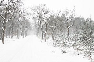 Sneeuw landschap op de Veluwe van Albert Beukhof