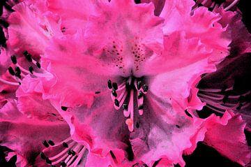 Rosa/schwarzer Rhododendren von Gera Wijlens