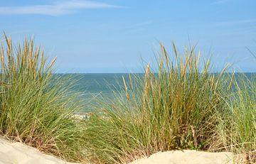 Helmgras in de duinen met de zee op de achtergrond van Trinet Uzun
