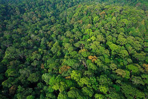 Luchtfoto van het regenwoud van Lambir Hills National Park von Nature in Stock