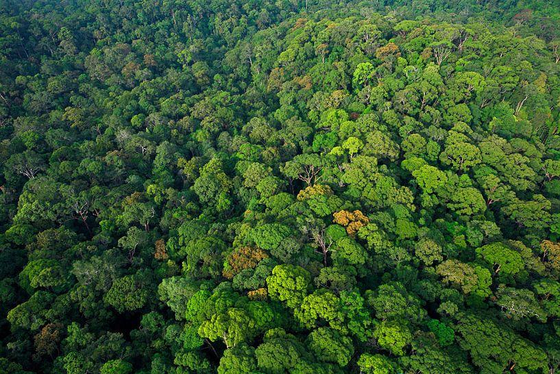 Luchtfoto van het regenwoud van Lambir Hills National Park van Nature in Stock