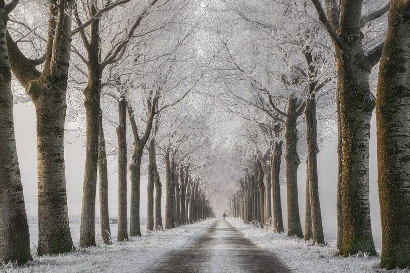 Winter Wandeling van Lars van de Goor
