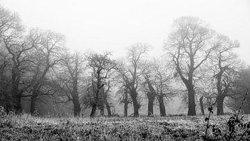 Eiken in de mist - Bergen op Zoom van Maurice Weststrate