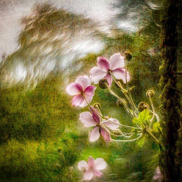 lovely flower van Dick Jeukens