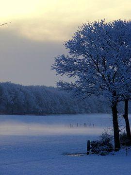 Ganzen op de vlucht in wintermorgen.  Geese in flight in winter . sur Joke Schippers