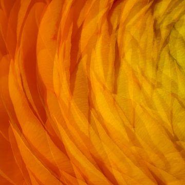 Oranje 3 von Jose Gieskes