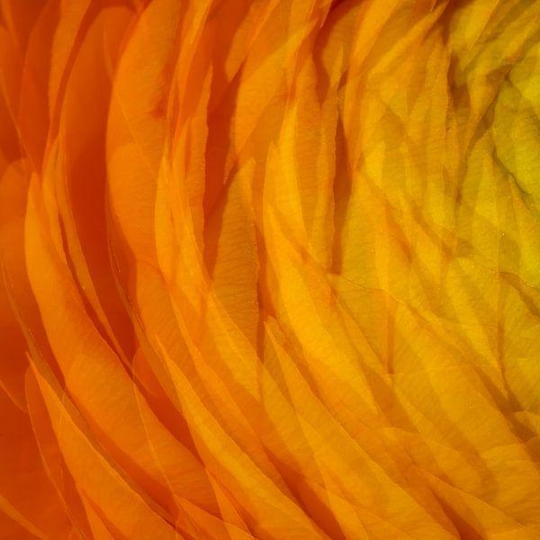 Oranje 3 van Jose Gieskes
