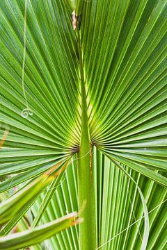 grüne Palmenblätter von Nadine Rall