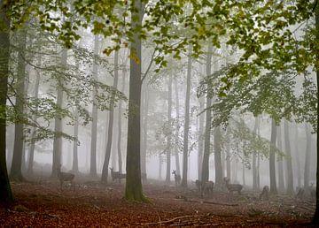 Herten in de mist van Dick Besse