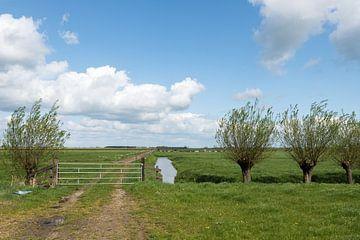 Paysage de polders avec clôture et saules Alblasserwaard sur Beeldbank Alblasserwaard