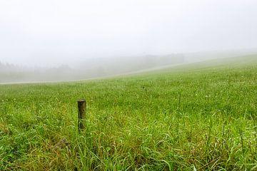 Holzpfosten in nebliger Graslandschaft von Johan Vanbockryck