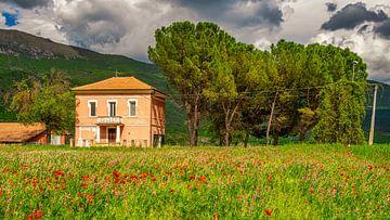Boerderij in Italië met bloeiende klaprozen I