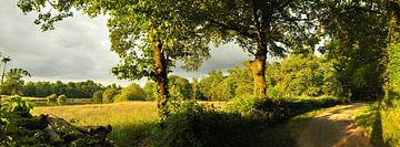 Landschap met bomen von Corinne Welp