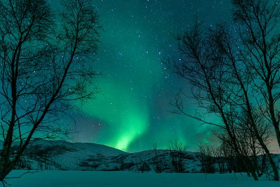 Nordlichter über den Lofoten Inseln in Norwegen