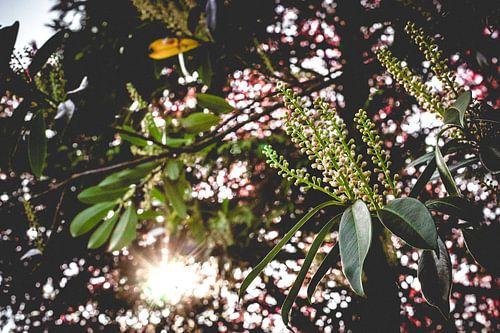 Zonneschijn tussen de bladeren