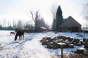 Horses in snowy meadow