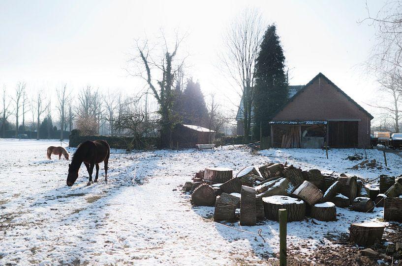 Horses in snowy meadow sur Tommy Köhlbrugge